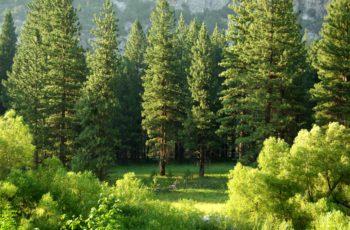 Direito ambiental: história e princípios